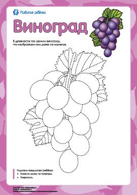 Раскраска «Виноград»