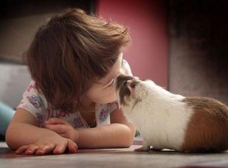 Как научить ребенка уважать животных