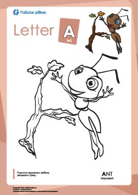 Раскраска «Английский алфавит»: буква «А»