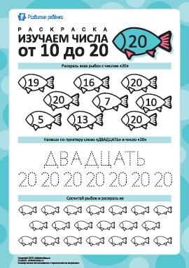 Изучаем число «20»