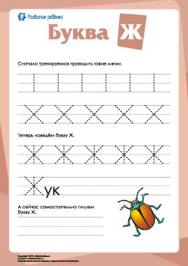 Русский алфавит: написание буквы «Ж»