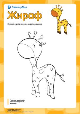 Раскраска «Жираф»