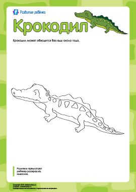 Раскраска «Крокодил»
