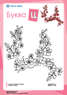 Раскраска «Русский алфавит»: буква «Ц»