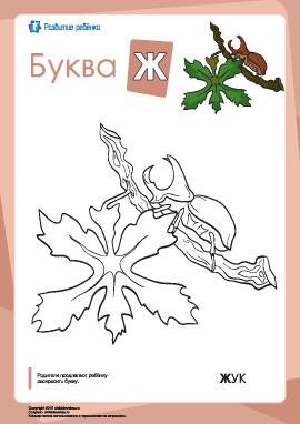 Раскраска «Русский алфавит»: буква «Ж»