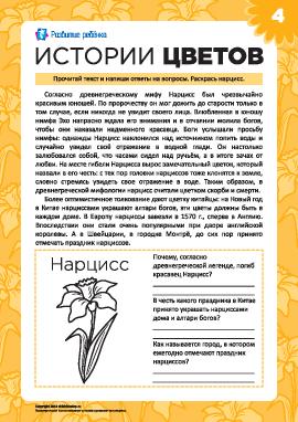 Истории цветов: нарцисс