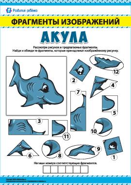 Акула: ищем фрагменты изображений