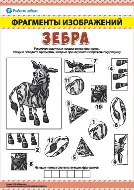 Зебра: ищем фрагменты изображений