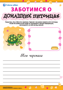 Особенности ухода за черепахами