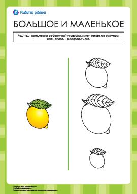 Какие лимоны одинаковые по размеру?
