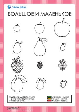 Раскраска — большие, средние и маленькие фрукты