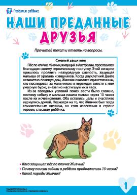 Истории о преданных животных: пес Живчик