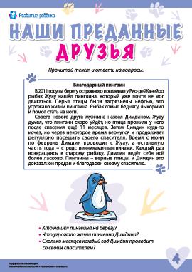 Истории о преданных животных: пингвин Димдин