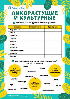 Определяем дикорастущие и культурные растения